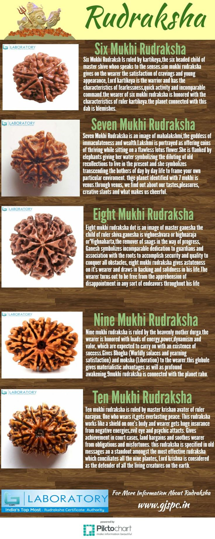 Rudraksha is a characteristic seed of the blue product of the evergreen tree Elaeocarpus ganitrus,indigenous to the Himalayas and found in Nepal, India and different parts of Southeast Asia.