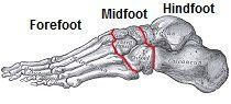 Foot Bones #foot #bones,ankle #bones,first #metatarsal #bone,fifth #metatarsal,pinky #toe http://new-hampshire.remmont.com/foot-bones-foot-bonesankle-bonesfirst-metatarsal-bonefifth-metatarsalpinky-toe/  # Foot Bones There are thirty three foot bones in humans making the foot a complex structure. They are arranged to be strong, stable and yet flexible enough for movement. The foot bones can be grouped into three sets: the tarsal bones, the metatarsals and the phalanges . The most common…
