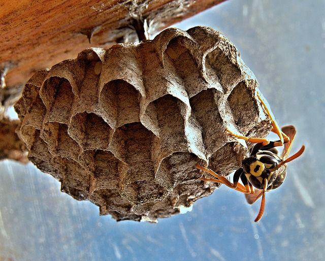 Alergia a picada de inseto   Tratar picada de inseto  Você é alérgico a picadas de insetos?  Se você for picado por uma abelha, vespa, jaqueta amarela, vespa ou formiga de fogo, você saberia se você teve uma reação alérgica?