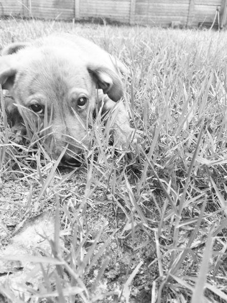 Puppy eys at Hammond Dog Park - Hammond, LA - Angus Off-Leash #dogs #puppies #cutedogs #dogparks #hammond #louisiana #angusoffleash