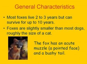 PowerPoint resource on the life of the fox