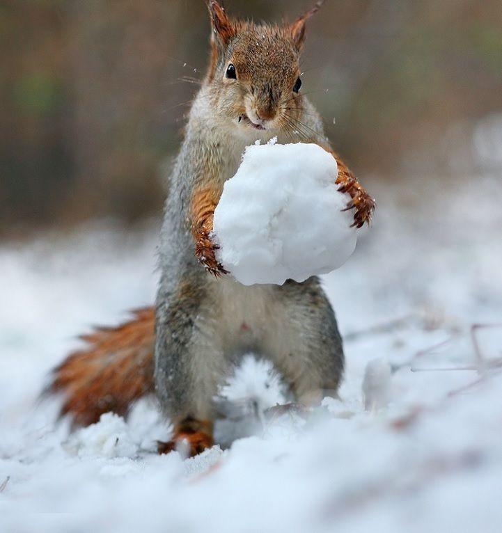 Животные зимой красивые картинки