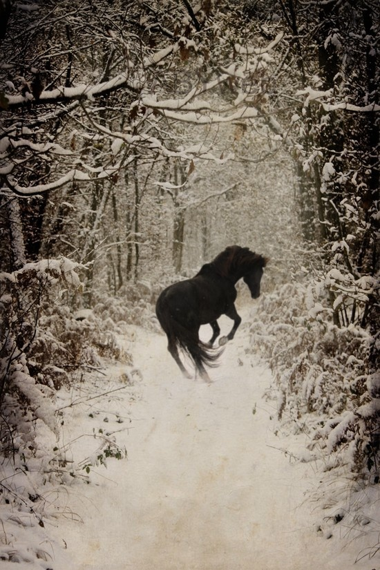 Black Horse in Snowy Woods reminds me of Narnia