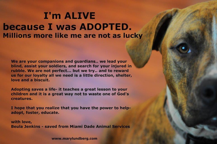 Dogs For Adoption At New Life Beginnings