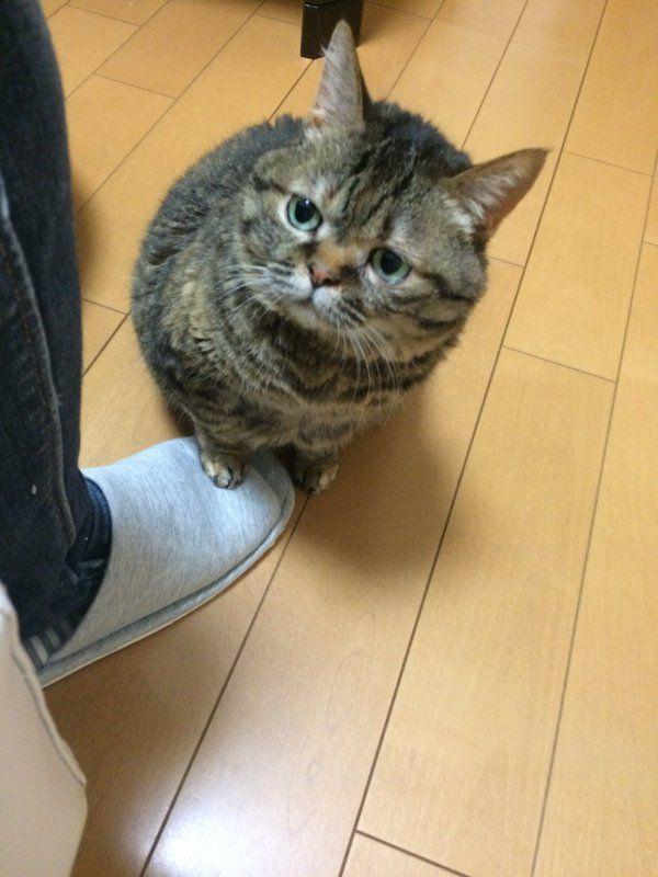ネコがご飯の時間に発する無言の圧力wwwwwwwwwwwww