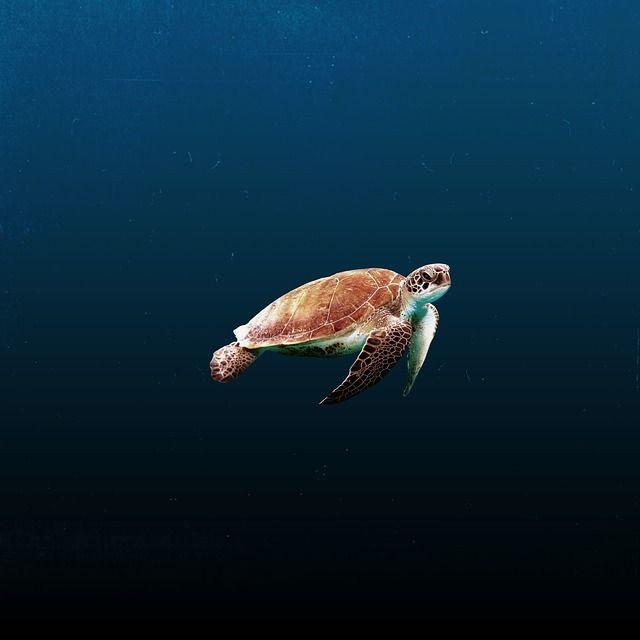Free photo: Water, Ocean, Animals, Blue, Calm - Free Image on Pixabay - 2913670
