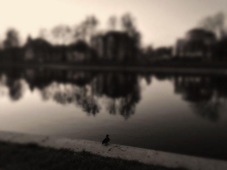 Duck meditation