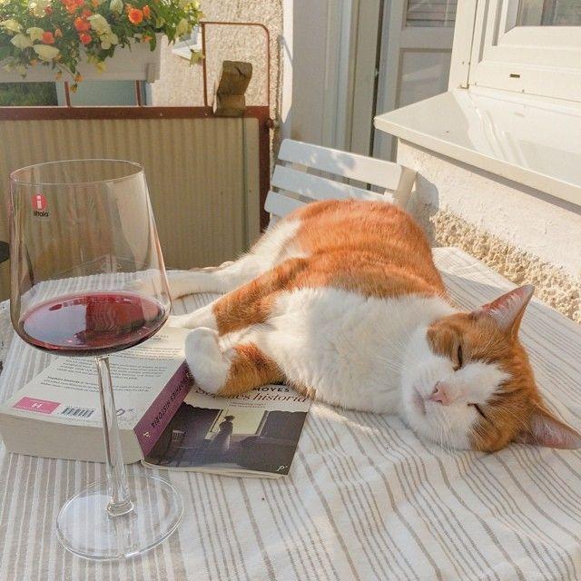 I väntan på att grillmästaren ska komma hem från cykelturen. #älskadekatt#katt#kattmys#balkonghäng#balkong#vin#pocketbok#sommarläsning#sommar#semester