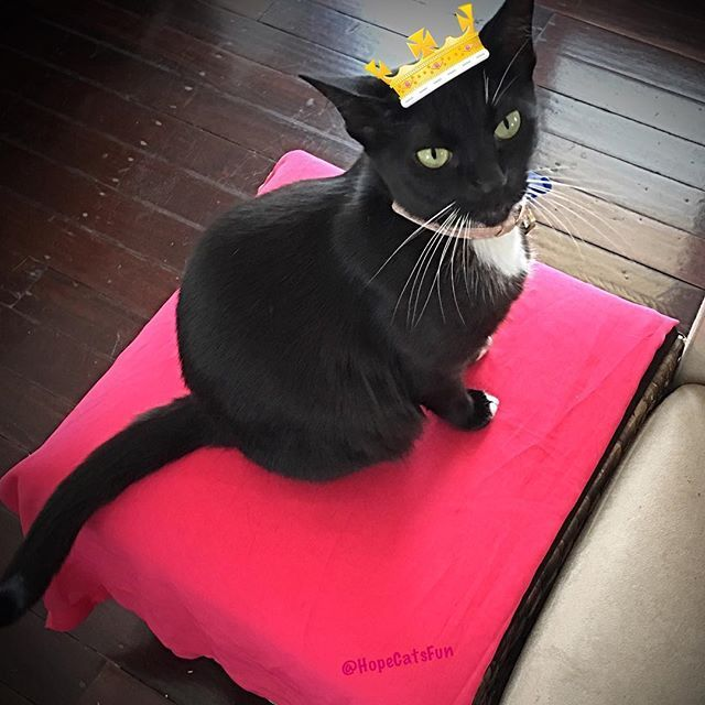 Princess Mittens looking pretty on pink #princessmittens #bestmeow #blackcat #blackcatsrock #blackcatsofinstagram #blackcatlove