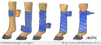 Bildergebnis für bandagen pferd