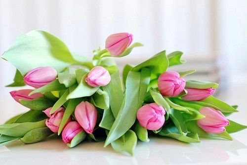.Beautiful Flower, Ears Spring, Pink Flower, Favorite Things, Summer Wedding, Wedding Bouquets, Fresh Flower, Pink Tulips, Bouquets Flower