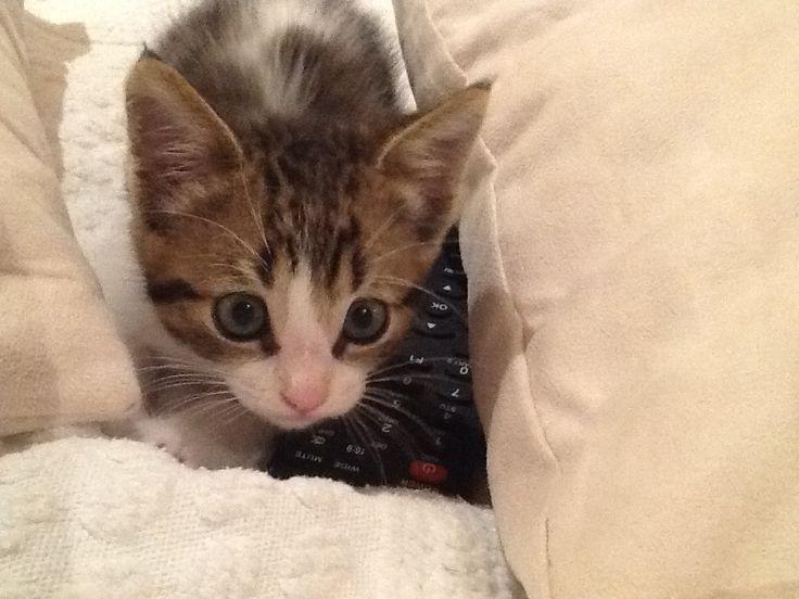 kitten very pretty!