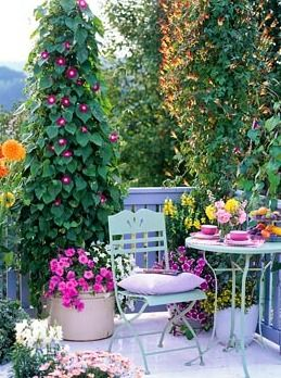 Balcony garden - N0 falta nada en este balc0n: l0s m0rning gl0ry trepand0 y fl0res a granel y una mesa y asient0s de jardin!!