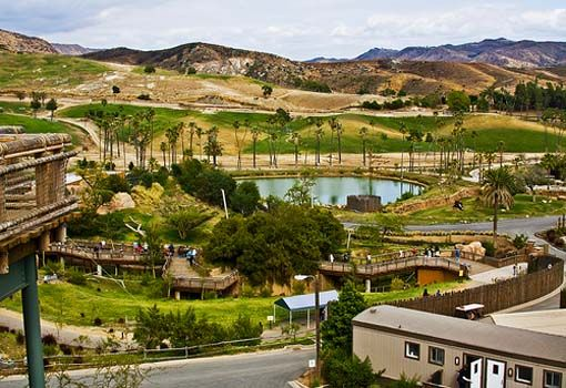 San Diego Wild Animal Park, One of the Biggest Tourist Attraction in San Diego, California