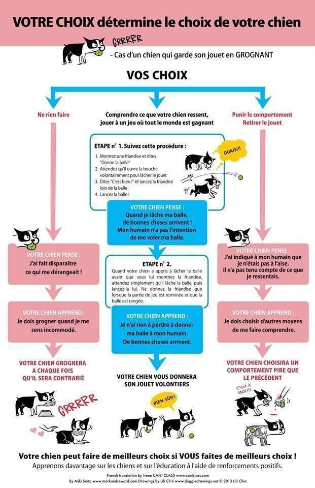 Comment le comportement humain influe sur celui de son chien ?                                                                                                                                                      Plus
