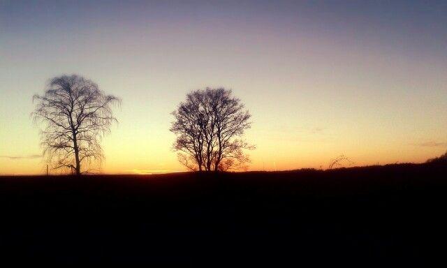 Fall | sunset | trees |