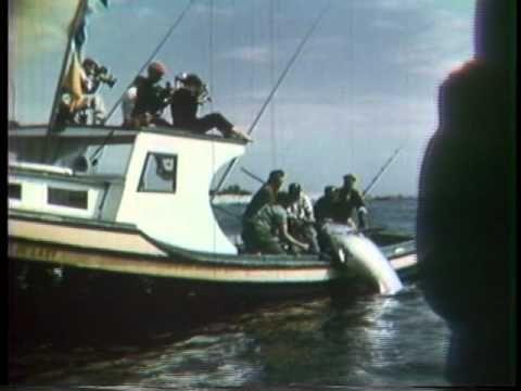 Bluefin Rodeo Wedgeport, Nova Scotia 1950s