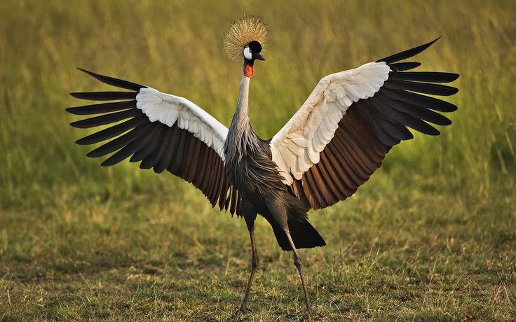 Libyan crane