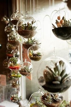 Clear hanging Terrariums, I love them. Maybe some with candles in them or beach theme for the bathroom #deco #home
