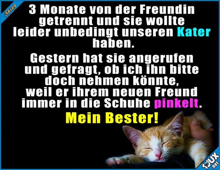 Treuer Freund :)  Lustige Sprüche und lustige Bilder #Humor #jux #1jux #Sprüche #Jodel #lustig #lustigeBilder #lustigeSprüche #Kater #Katze #Katzen #Freund