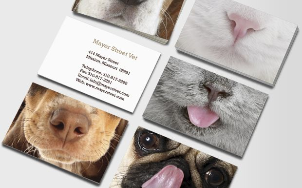 Cute Little Noses business card