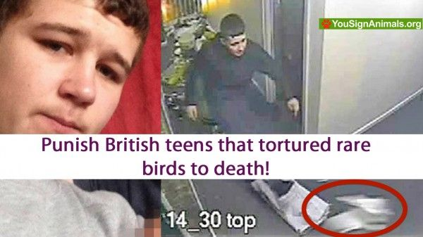 Punish British teens that snatched and mistreated rare birds for fun! | YouSignAnimals.org