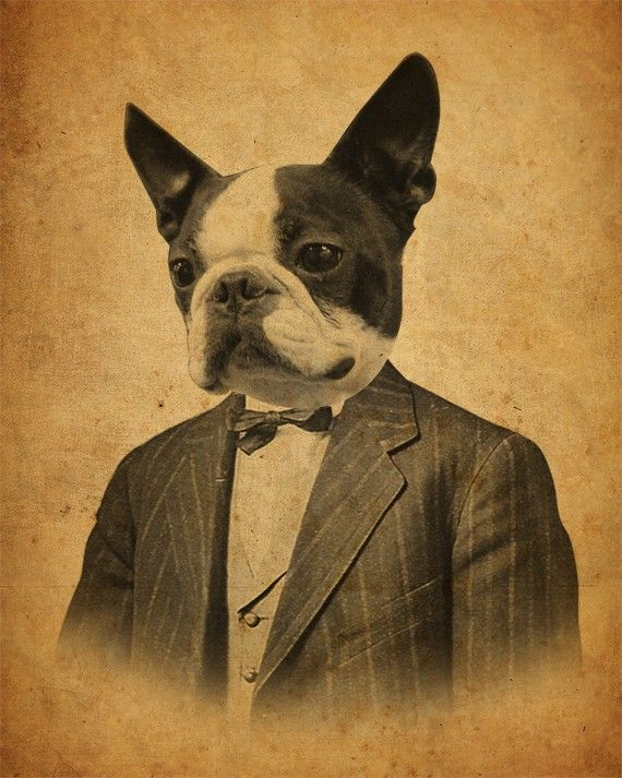 Art Boston Terrier Terrier de Boston Art Print par LuciusArt