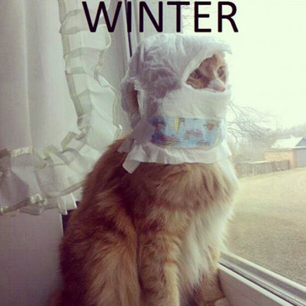 Image result for winter is here cat