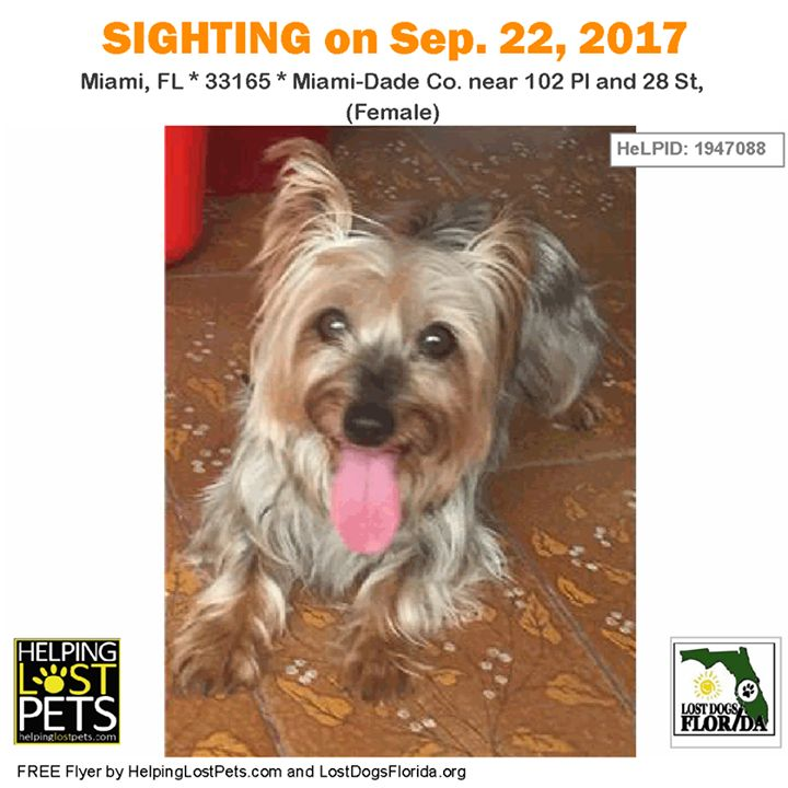 Do you know this Dog?   CONTACT dboan@hotmail.com Phone: (305) 458-0491  #Miami (102 Pl & 28 St (Female) )  #FL 33165 #Miami-Dade Co.  #Dog 09-22-2017! Female #YorkshireTerrier #Yorkie Grey / Tan/  Escaped from finder and is now loose again.    More info photos dog's location on the HeLP map or to message finder: http://ift.tt/2xuO1mb  Let's get this dog home! #lostdogsflorida  #HelpingLostPets
