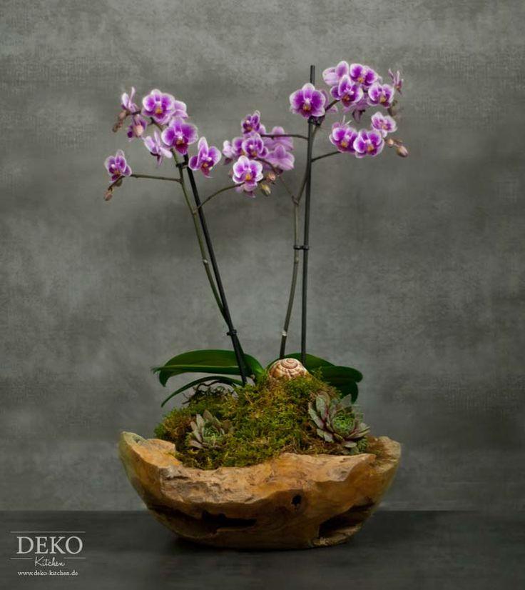 diy orchideen effektvoll dekorieren deko kitchen plants. Black Bedroom Furniture Sets. Home Design Ideas