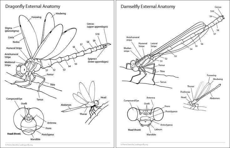 11 Best Insects Images On Pinterest Bugs Insects And Anatomy