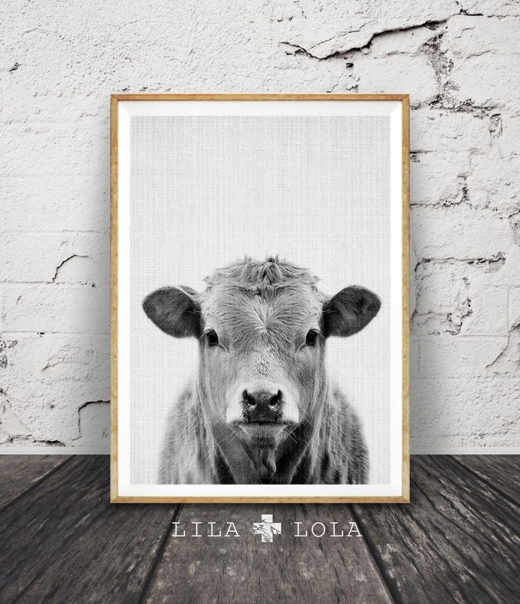 Cow Print, Nursery Farm Animal Wall Art, Black and White Printable Photo, Digital Download, Large Poster, Farmhouse Decor, Modern Minimalist by LILAxLOLA on Etsy https://www.etsy.com/listing/255189411/cow-print-nursery-farm-animal-wall-art