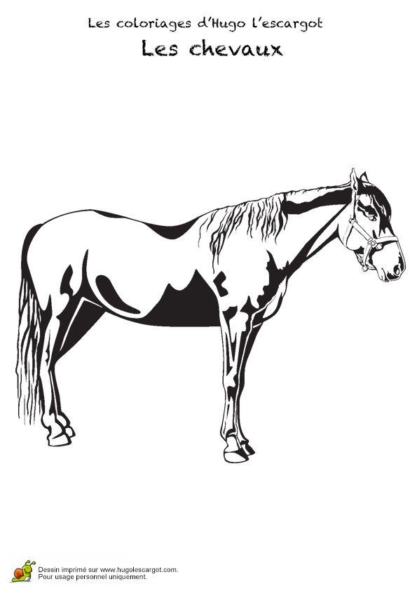 dessin dun beau cheval colorier - Dessins De Chevaux
