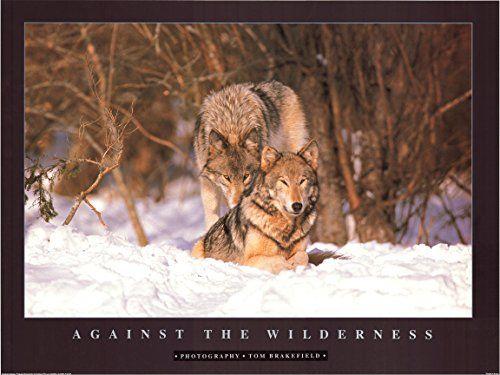 Wolves in Snow Wildlife Animal Art Print Poster (32x24) I... https://www.amazon.com/dp/B00M83V9AW/ref=cm_sw_r_pi_dp_x_7hFByb4M44PQH