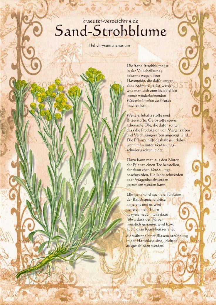 891 best Pflanzenzeichnungen images on Pinterest | Plants, Herbs and ...