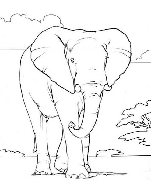 African Elephant coloring pages | Free coloring pages for kids