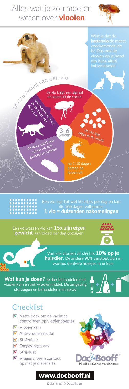 Bekijk onze infographic over vlooien en leer alles over deze kleine hardnekkige beestjes!