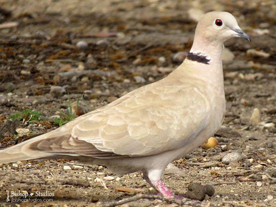 nunavut bird list