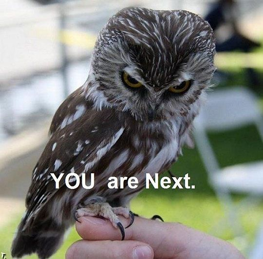 funny-owl-angry-face-of-disapproval
