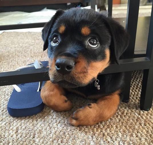 Der hundigste Hundeblick von allen