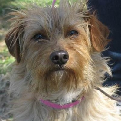 Wally is a super-friendly little terrier mix who charmed the staff at the South L.A. shelter.