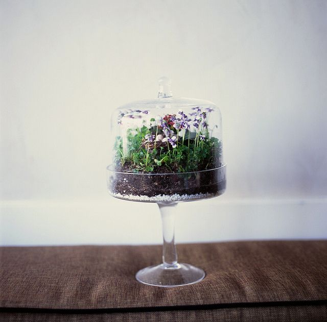 Cake Stand Terrarium. These could be so pretty in a row.
