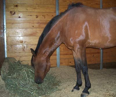 Best Horse Barn Hay Storage Grain Room Nutrition Images On - Before and after achorse stable