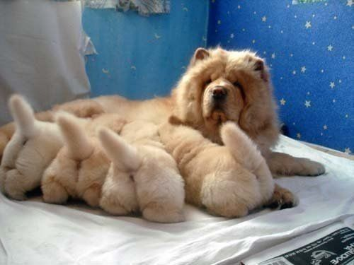 Fluffy Puppy Butts