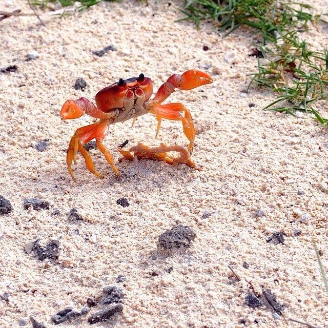 Feeling crabby? Visit the Bahamas!