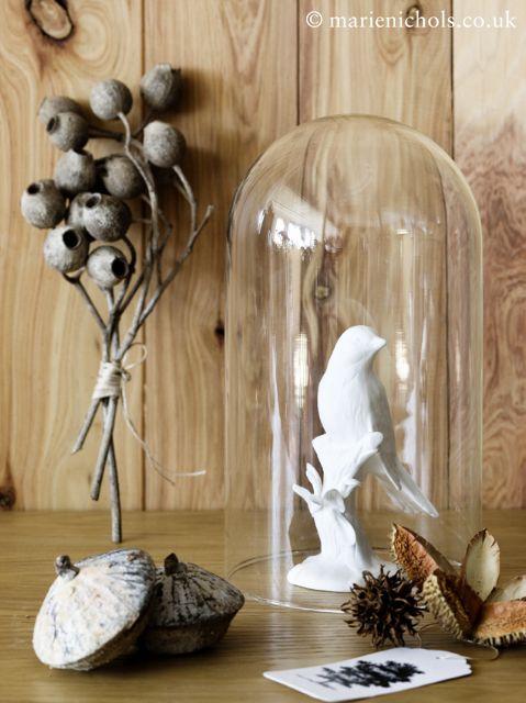 Bell jar bird natural