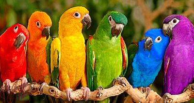 Rainbow colours and my favourite kind of bird (Parrots / Parakeets)