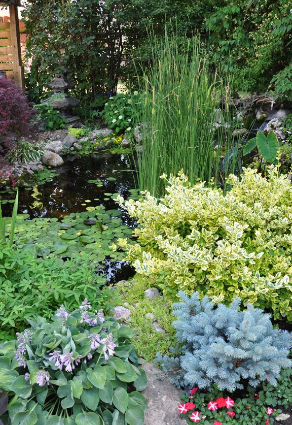 Beautiful planting around a garden pond ponds water for Plants for around garden ponds