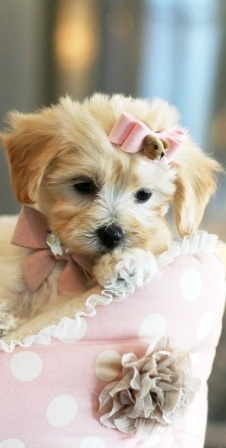 It's official.. When my kids are done with me, I'm going to need to put my mommy needs into something... A little doggie will be perfect! :)