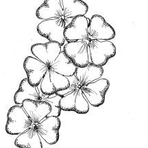 A Bouquet of Four-Leaf Clover Coloring Page